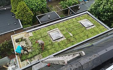 Groendak Haarlem