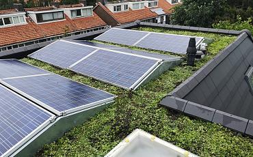 Groen dak met zonnepanelen? Doen!